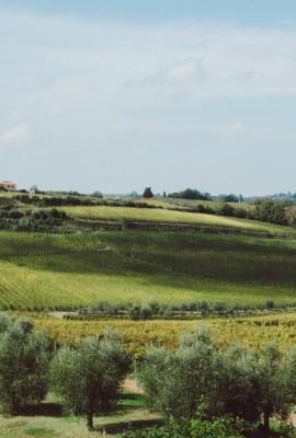 Azienda Agricola l'Avvenire